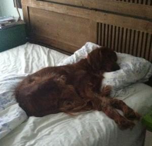 Asimov in bed